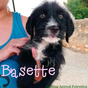 Basette